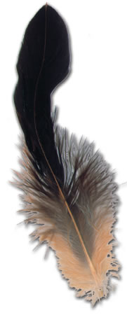 ROOSTER COQUE TAIL FEATHERS (Strung) 6''-8''