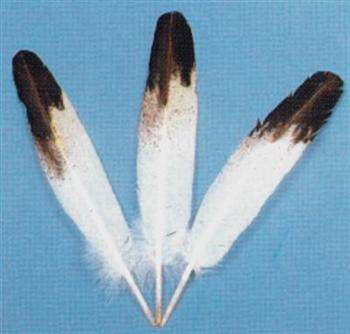 HAND-PAINTED IMITATION EAGLE WING FEATHERS