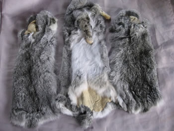 Colored Rabbit Skins