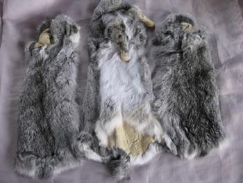 Colored Rabbit Skins