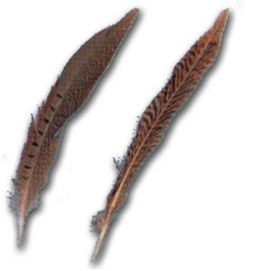 Ring Neck Pheasant Tail Feathers 10''-12''